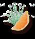 Grejpfrut & Trawa cytrynowa